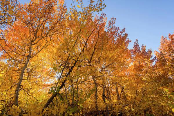 Photograph - Aspen Leaves by Robert Potts