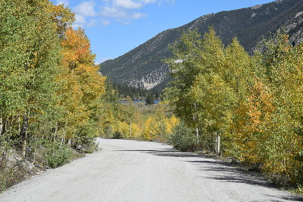 Photograph - Aspen Lined Road by Margarethe Binkley