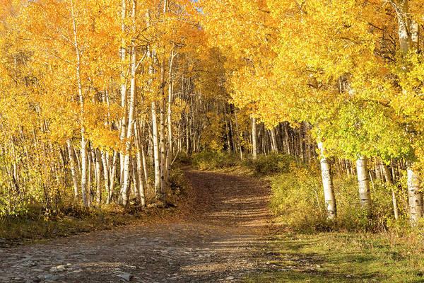 Photograph - Aspen Path by Denise Bush