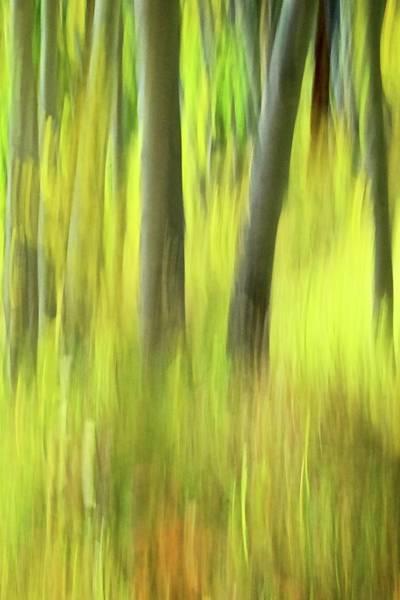 Photograph - Aspen Photo Impressionism by Flying Z Photography by Zayne Diamond