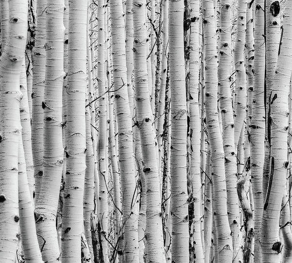 Photograph - Aspen by Rand