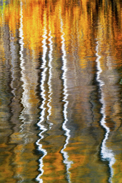Copyright Wall Art - Photograph - Aspen Ripples Of Gold by Mike Berenson