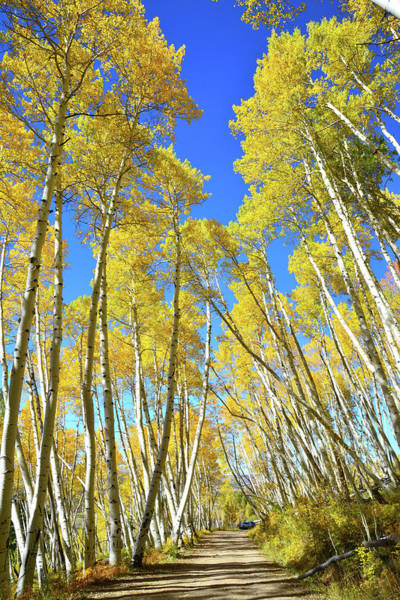 Photograph - Aspen Road by Ray Mathis