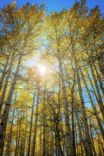Photograph - Aspen Sun by Bud Simpson