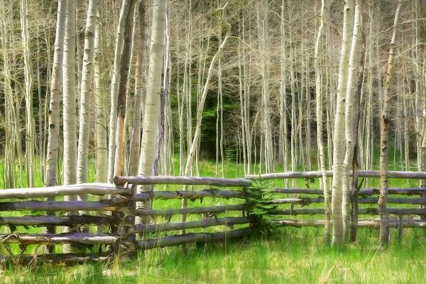 Wall Art - Photograph - Aspen Tranquility by Donna Kennedy