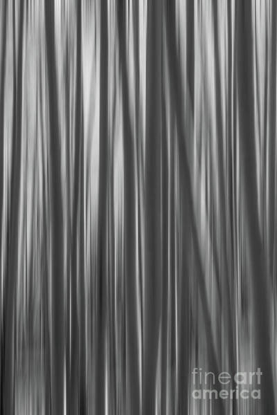 Photograph - Aspen Trees Abstract Bw by Michael Ver Sprill