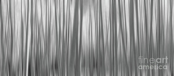 Photograph - Aspen Trees Abstract Pano Bw by Michael Ver Sprill
