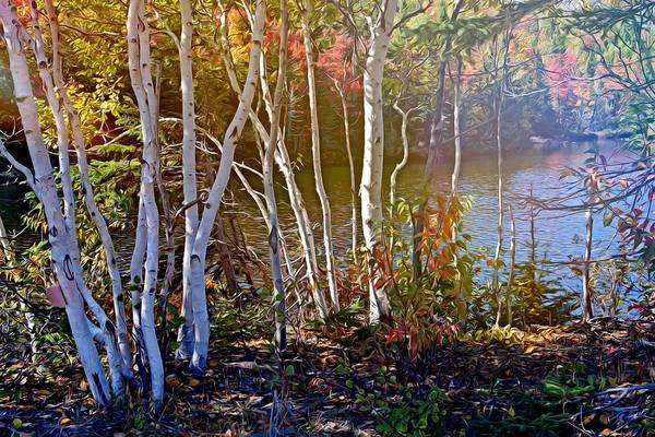Photograph - Aspen Trees In The Fall by Tatiana Travelways