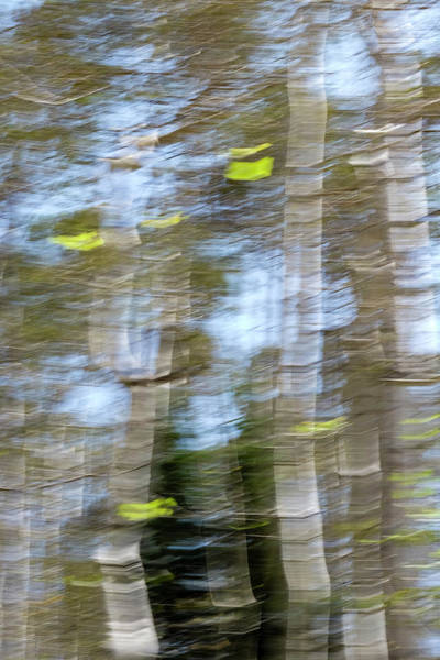Photograph - Aspen Twist by Deborah Hughes