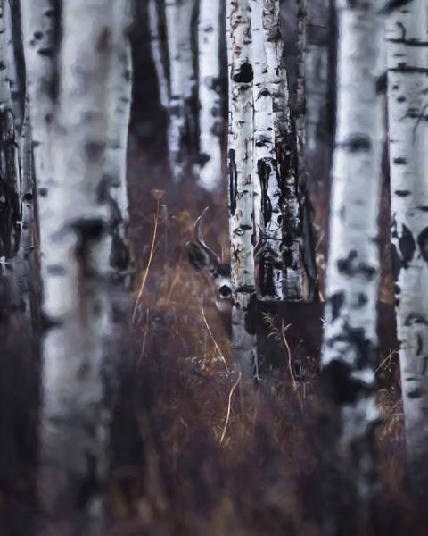 Colorado Wildlife Digital Art - Aspen View 2 by Ernie Echols