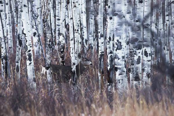 Colorado Wildlife Digital Art - Aspen View 3 by Ernie Echols