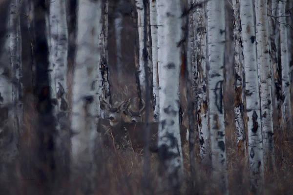 Colorado Wildlife Digital Art - Aspen View by Ernie Echols