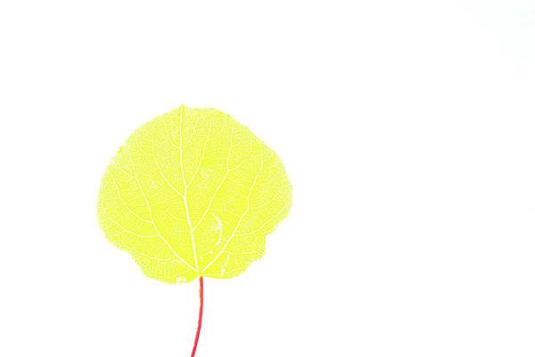 Digital Art - Aspen Yellow by Marie Leslie