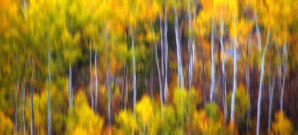 Photograph - Aspens Alive by Darren  White
