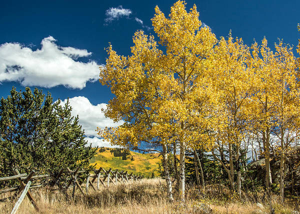 Wall Art - Photograph - Aspens And Fence by Dawn Key