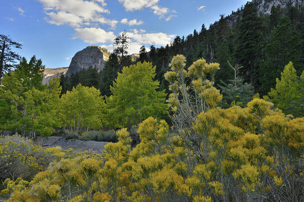 Photograph - Aspens And Rabbitbrush Beneath Mt. Charleston by Ray Mathis