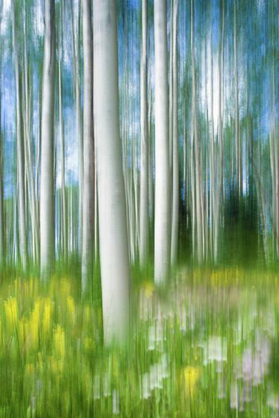 Photograph - Aspens And Wildflowers - Vertical by Michael Blanchette
