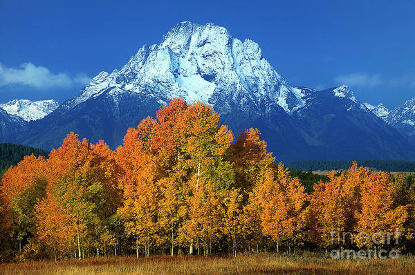 Photograph - Aspens Fall Mount Moran Grand Tetons National Park Wyoming by Dave Welling