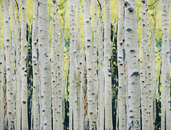 Painting - Aspens Forest - Painted by Ericamaxine Price