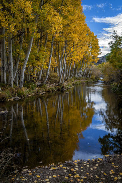 California Adventure Photograph - Aspens Reflected by Cat Connor