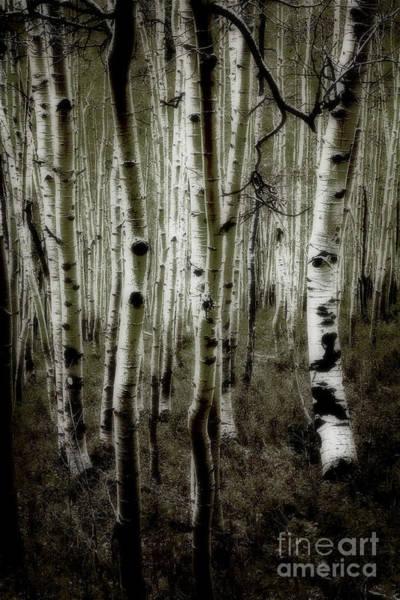 Photograph - Aspens by Scott Kemper