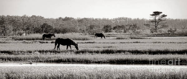 Wall Art - Photograph - Assateague by Olivier Le Queinec