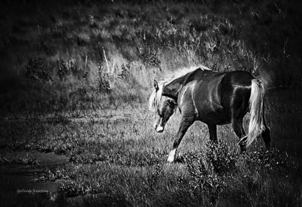 Photograph - Assateague Wild Pony by Gerlinde Keating - Galleria GK Keating Associates Inc