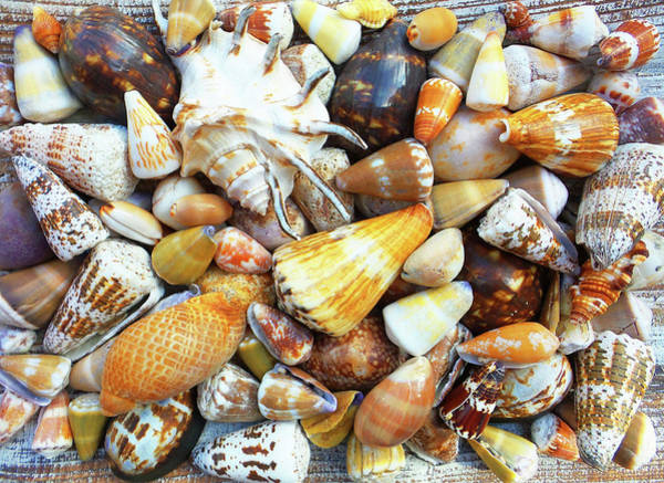 Wall Art - Photograph - Assorted Maui Sea Shells by Stacy Vosberg