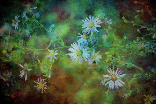 Photograph - Aster 4271 Idp_2 by Steven Ward