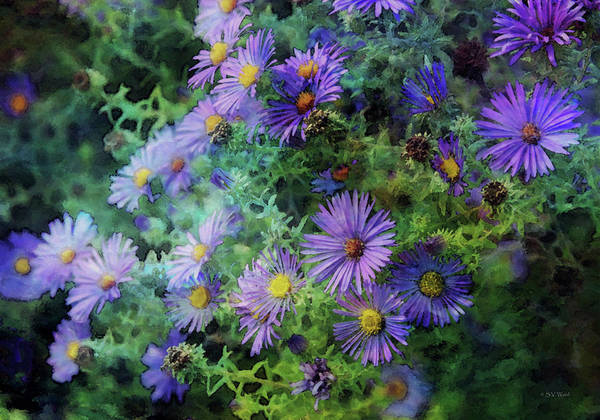 Photograph - Aster 4468 Idp_2 by Steven Ward