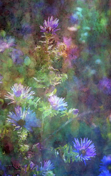 Photograph - Aster 5077 Idp_2 by Steven Ward