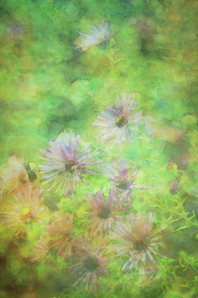 Photograph - Aster Impression 5642 Idp_2 by Steven Ward