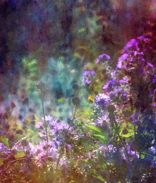 Photograph - Aster Mist 5079 Idp_2 by Steven Ward