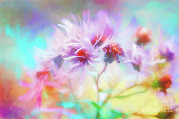 Photograph - Asters Gone Wild by Anita Pollak