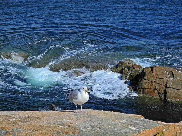 Photograph - Astride The Vast Cliffs by Lynda Lehmann