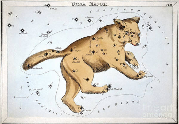 Photograph - Astronomy: Ursa Major by Granger