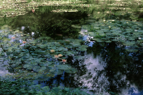 Photograph - At Claude Monet's Water Garden 10 by Dubi Roman