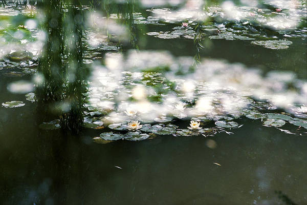 Photograph - At Claude Monet's Water Garden 5 by Dubi Roman
