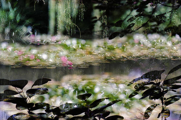 Photograph - At Claude Monet's Water Garden 9 by Dubi Roman