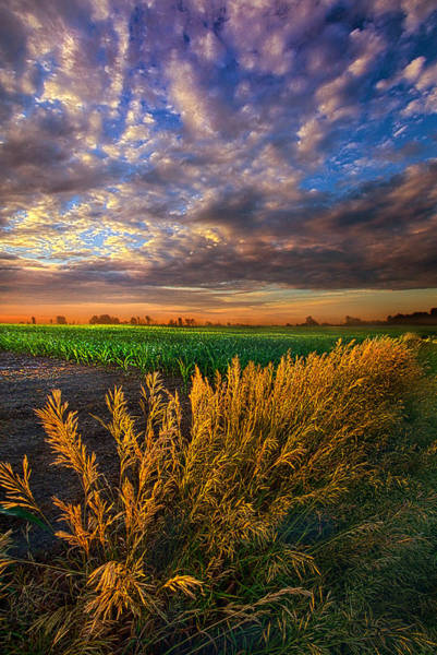 Photograph - At First Blush by Phil Koch