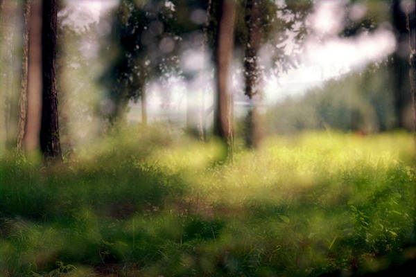 Photograph - At Menashe Forest by Dubi Roman
