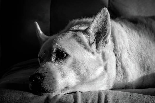 Photograph - At Rest by Guy Whiteley