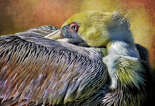 Gular Photograph - At Rest by HH Photography of Florida