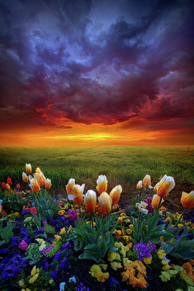 Photograph - At The End Of Darkness by Phil Koch