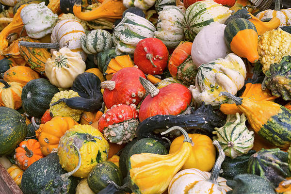 Photograph - At The Farmers Market - Squash And Pumpkins by Peggy Collins