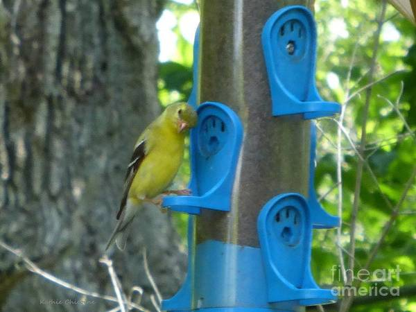 Photograph - At The Feeder by Kathie Chicoine