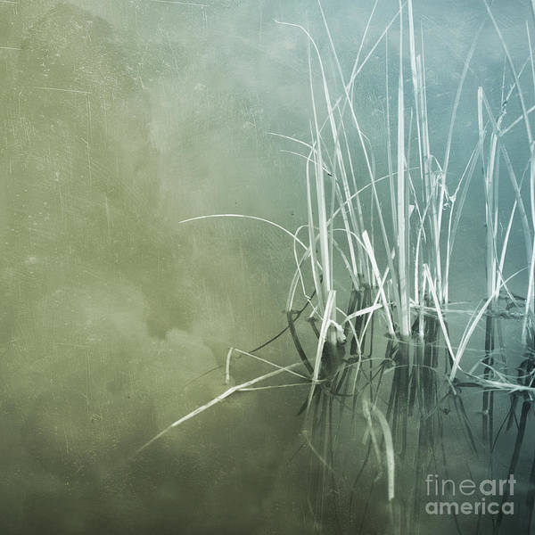 Wall Art - Photograph - At The Lake 5 by Priska Wettstein