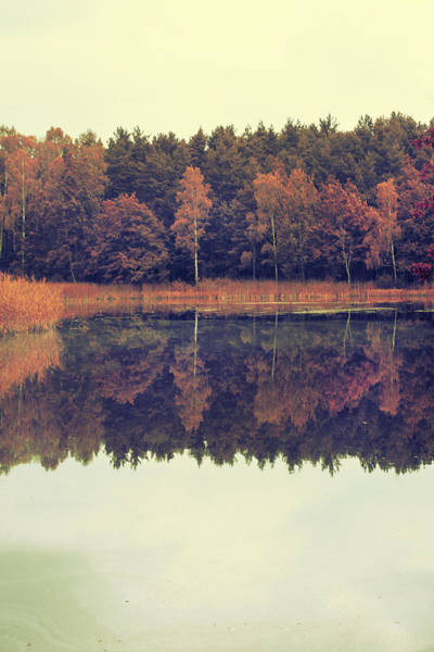 Fallen Leaf Lake Photograph - At The Lake by Art of Invi
