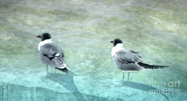 Photograph - At The Waters Edge by Judy Hall-Folde