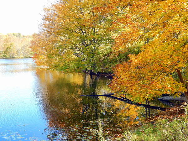 Wall Art - Photograph - At The Water's Edge by Karen Cook